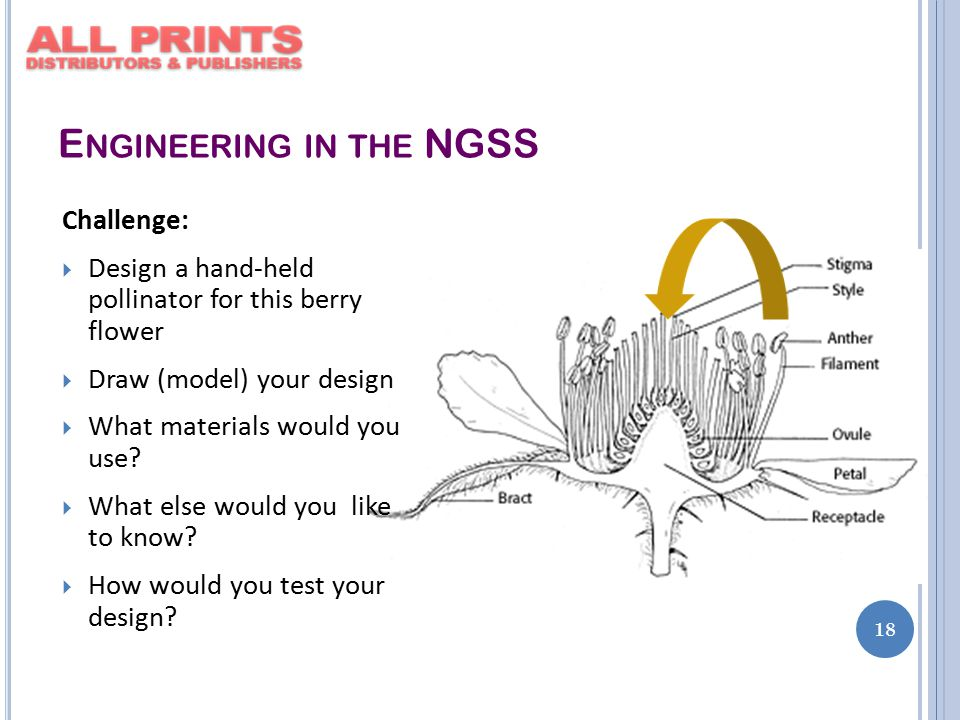 E NGINEERING IN THE NGSS 18 Challenge:  Design a hand-held pollinator for this berry flower  Draw (model) your design  What materials would you use.