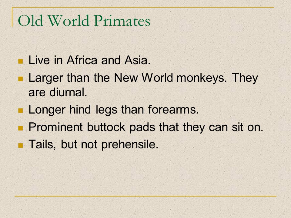 Old World Primates Live in Africa and Asia. Larger than the New World monkeys.