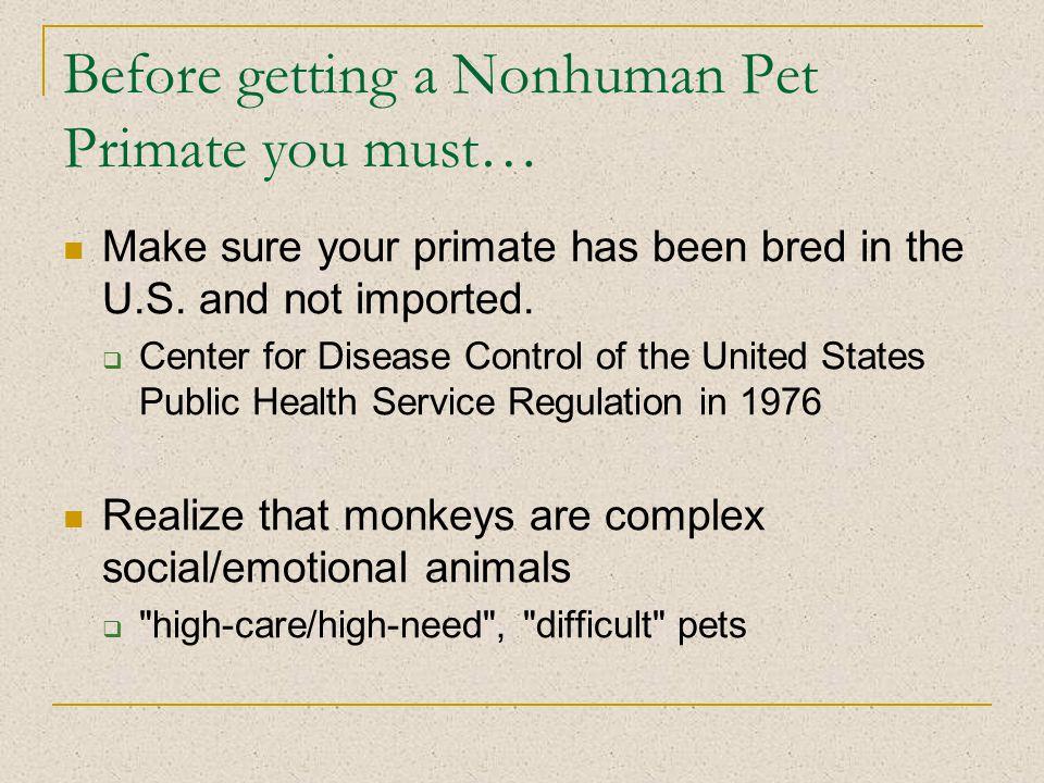 Before getting a Nonhuman Pet Primate you must… Make sure your primate has been bred in the U.S.