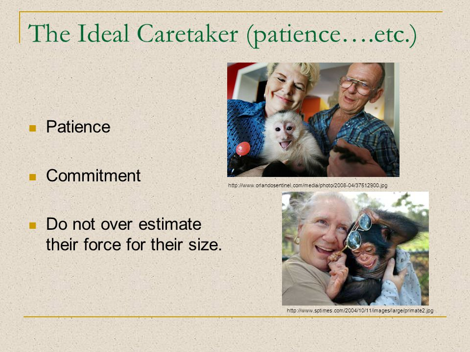 The Ideal Caretaker (patience….etc.) Patience Commitment Do not over estimate their force for their size.
