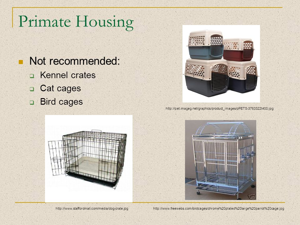 Primate Housing Not recommended:  Kennel crates  Cat cages  Bird cages http://www.freewebs.com/birdcages/chrome%20plated%20large%20parrot%20cage.jpghttp://www.staffordmall.com/media/dog-crate.jpg http://pet.imageg.net/graphics/product_images/pPETS-3763322t400.jpg