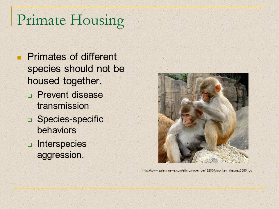 Primate Housing Primates of different species should not be housed together.