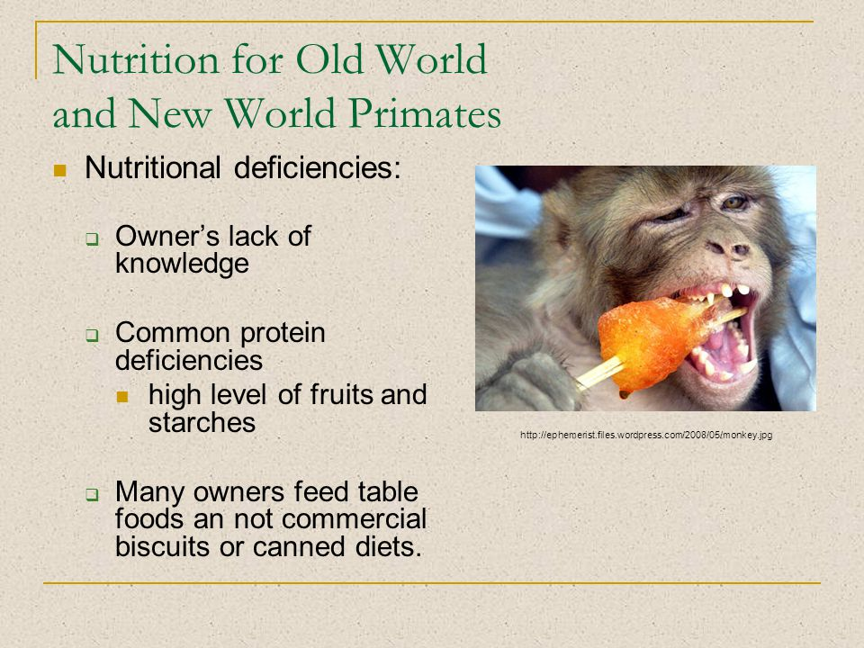 Nutrition for Old World and New World Primates Nutritional deficiencies:  Owner's lack of knowledge  Common protein deficiencies high level of fruits and starches  Many owners feed table foods an not commercial biscuits or canned diets.