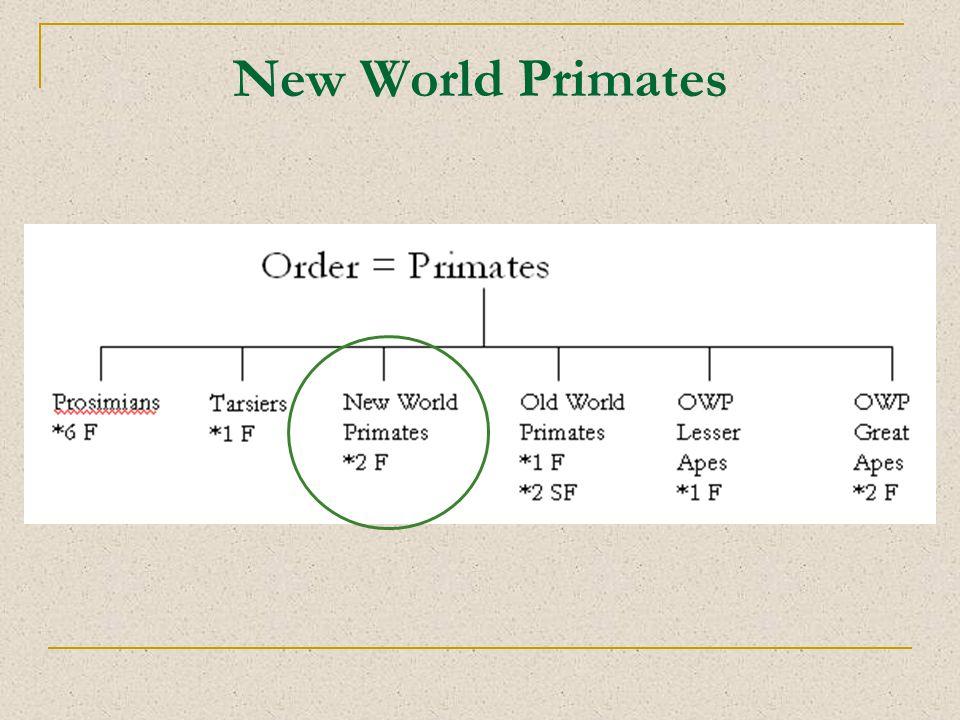 New World Primates
