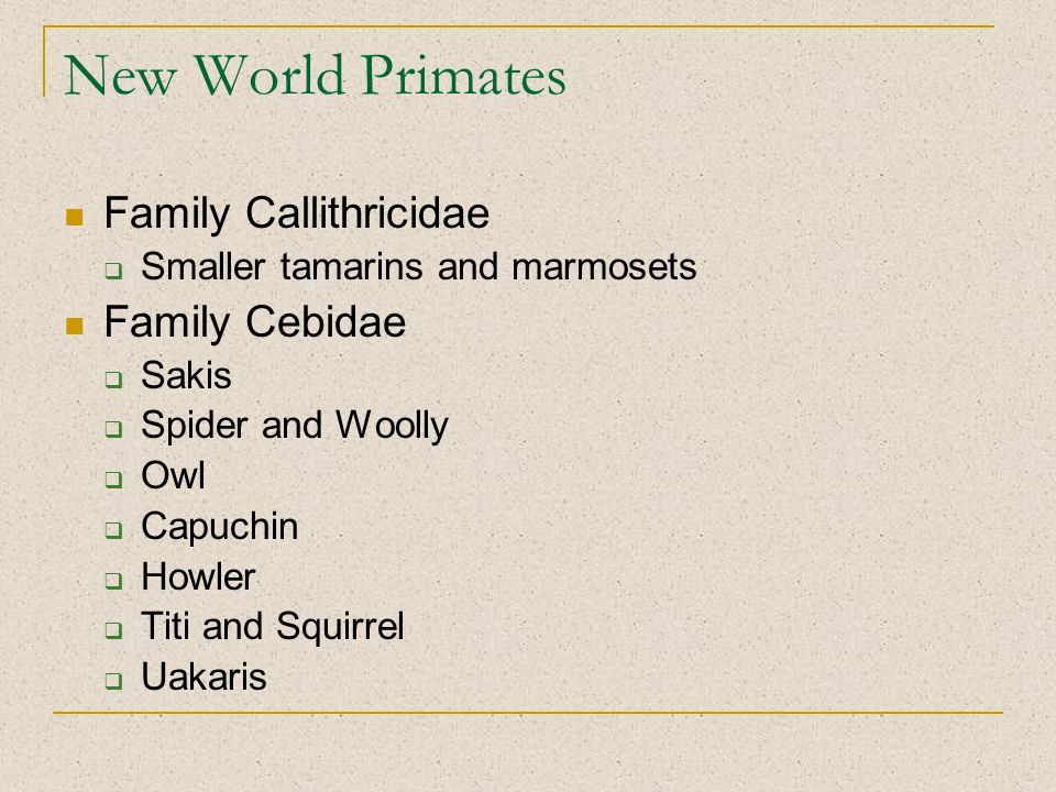 New World Primates Family Callithricidae  Smaller tamarins and marmosets Family Cebidae  Sakis  Spider and Woolly  Owl  Capuchin  Howler  Titi and Squirrel  Uakaris