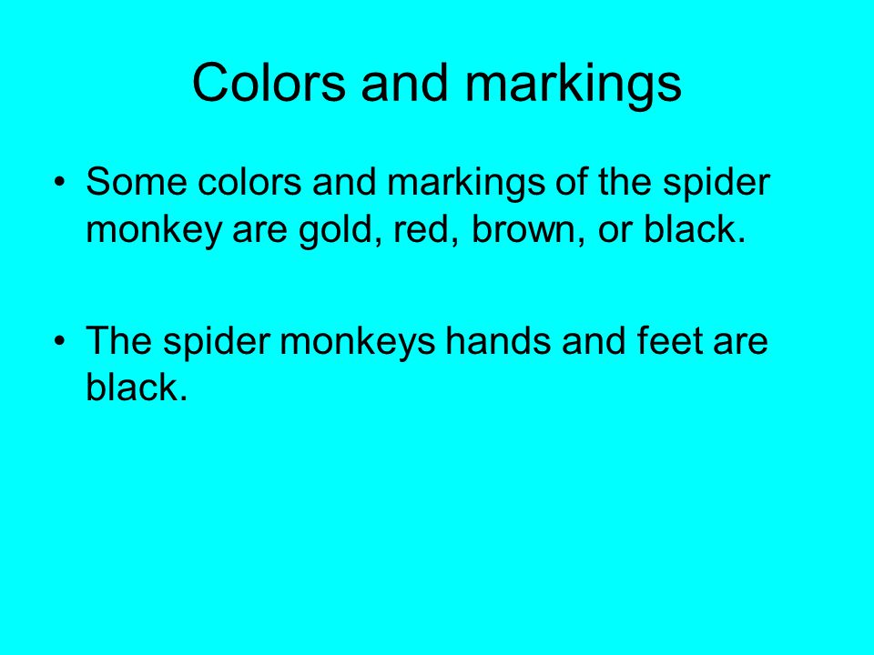 Colors and markings Some colors and markings of the spider monkey are gold, red, brown, or black. The spider monkeys hands and feet are black.