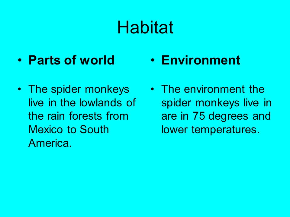 Habitat Parts of world The spider monkeys live in the lowlands of the rain forests from Mexico to South America. Environment The environment the spide