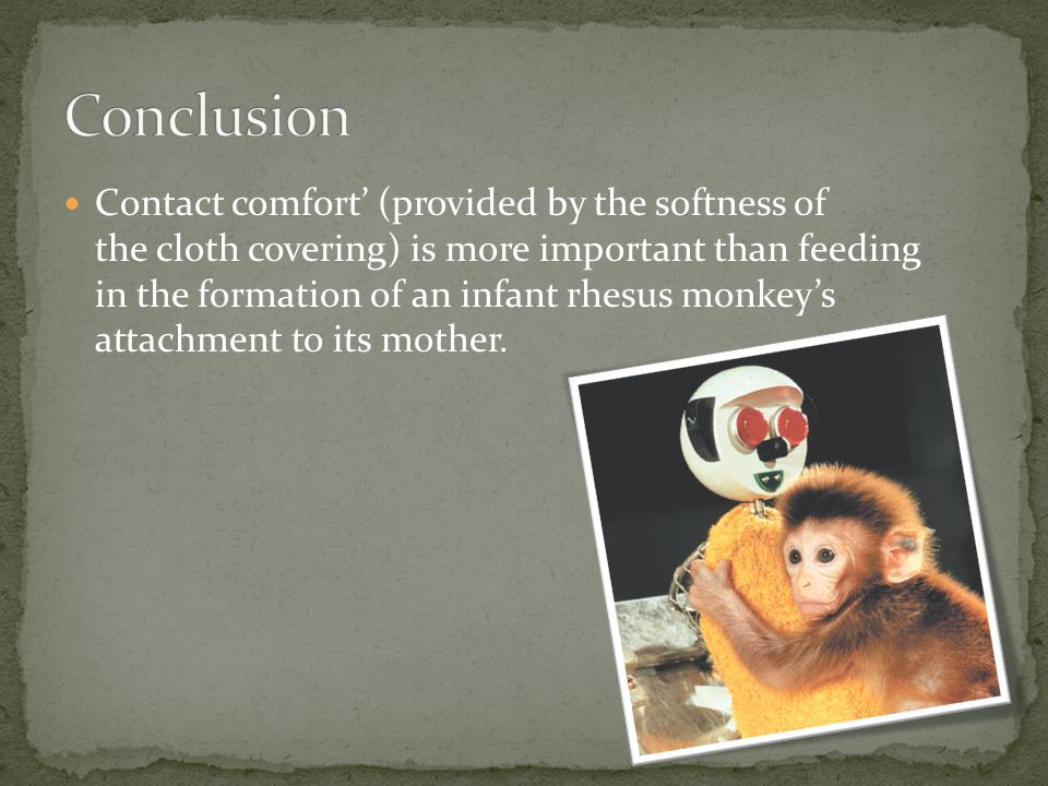 Contact comfort' (provided by the softness of the cloth covering) is more important than feeding in the formation of an infant rhesus monkey's attachment to its mother.