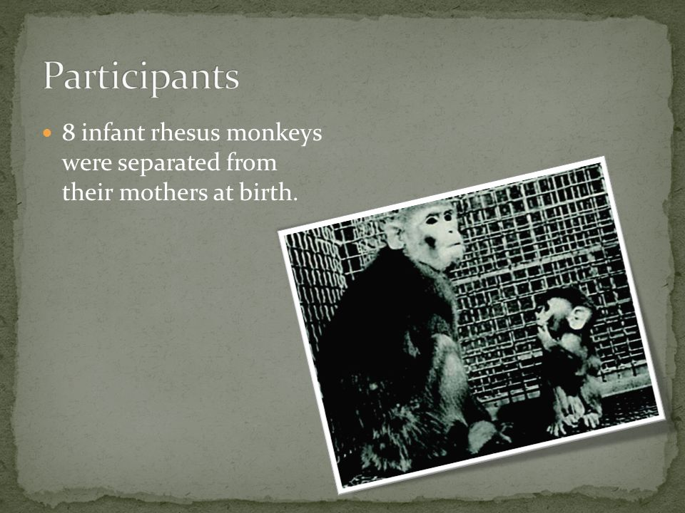 8 infant rhesus monkeys were separated from their mothers at birth.