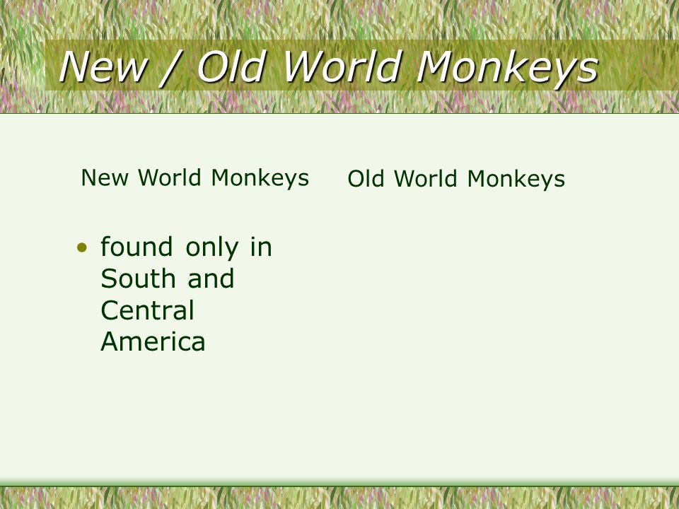 New / Old World Monkeys found only in South and Central America New World Monkeys Old World Monkeys
