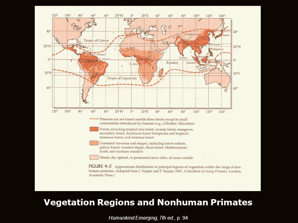 Humankind Emerging, 7th ed., p. 94 Vegetation Regions and Nonhuman Primates