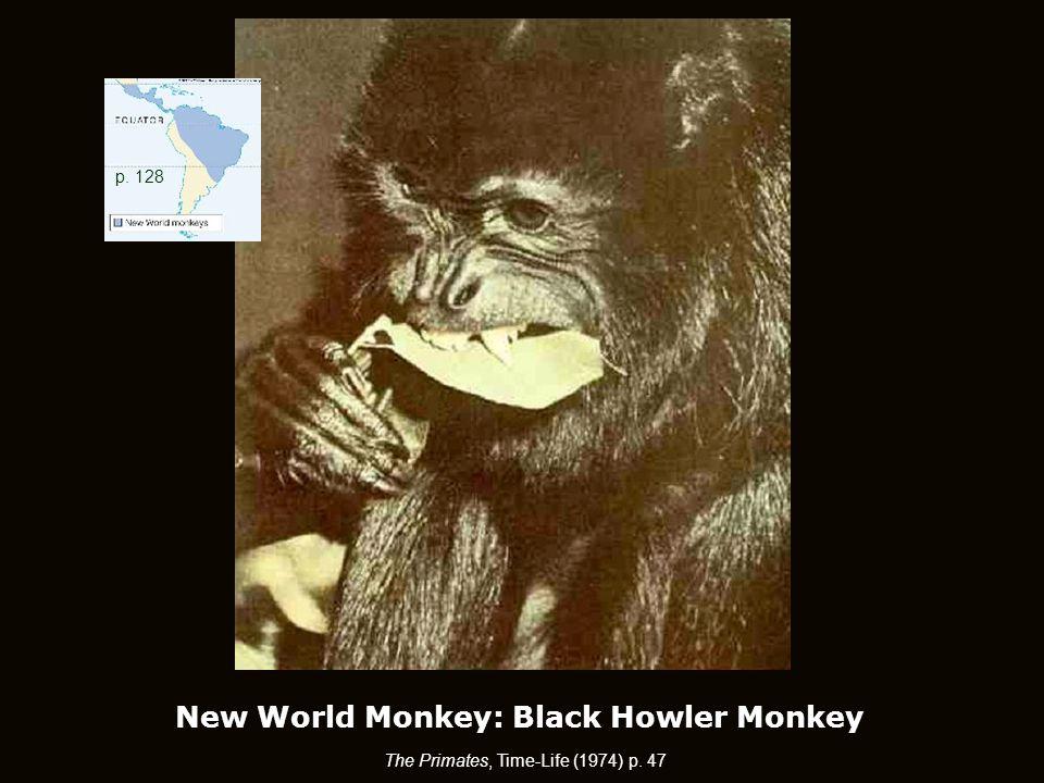 New World Monkey: Black Howler Monkey The Primates, Time-Life (1974) p. 47 p. 128