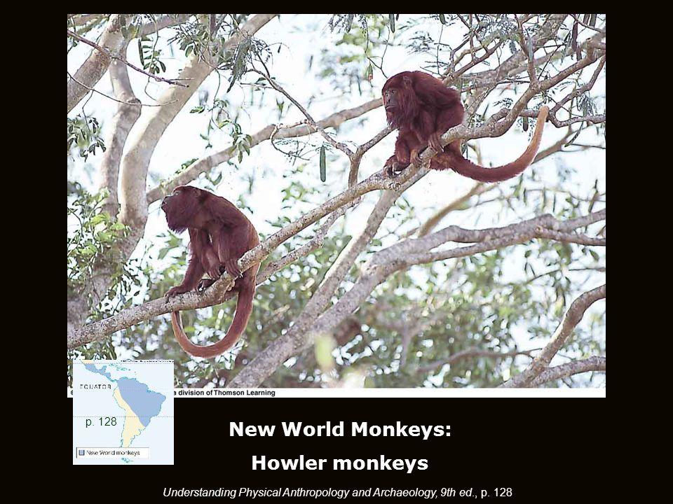 New World Monkeys: Howler monkeys p.