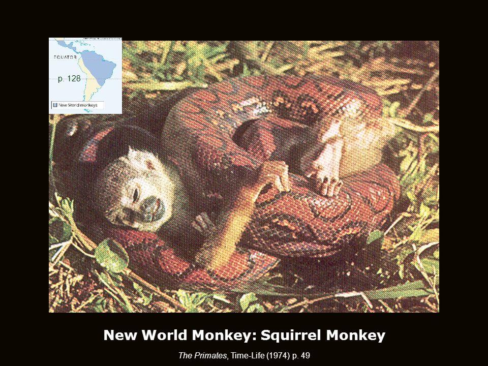 New World Monkey: Squirrel Monkey The Primates, Time-Life (1974) p. 49 p. 128