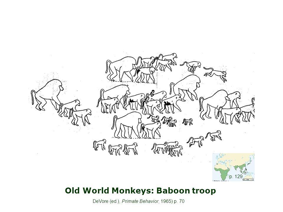 Old World Monkeys: Baboon troop DeVore (ed.), Primate Behavior, 1965) p. 70 p. 129