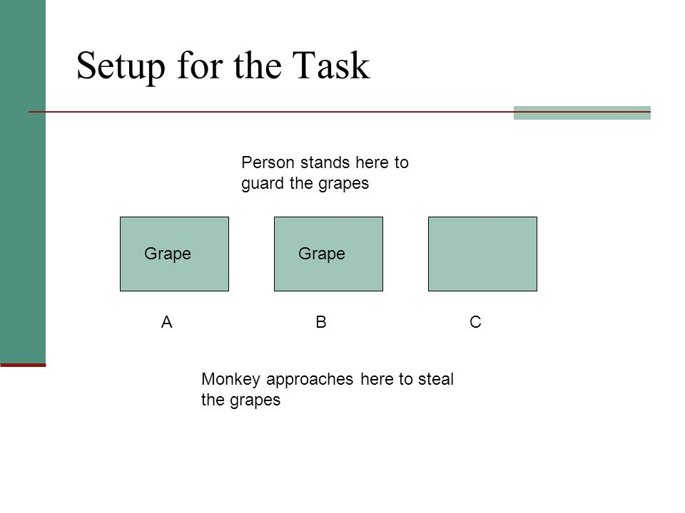 Setup for the Task Person stands here to guard the grapes BAC Monkey approaches here to steal the grapes Grape