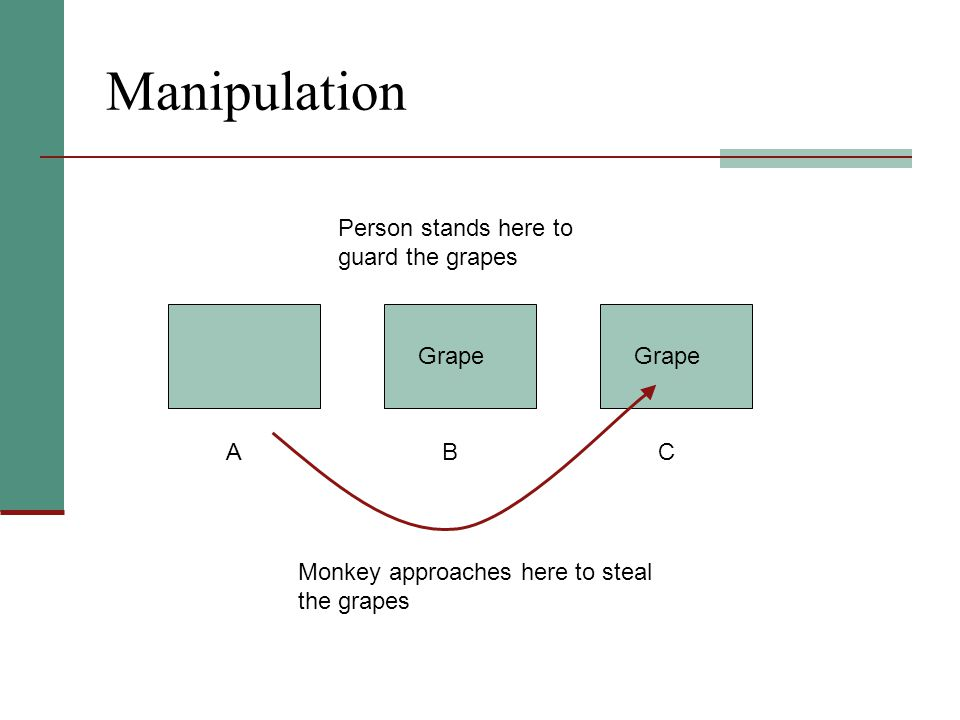 Manipulation Person stands here to guard the grapes BAC Monkey approaches here to steal the grapes Grape
