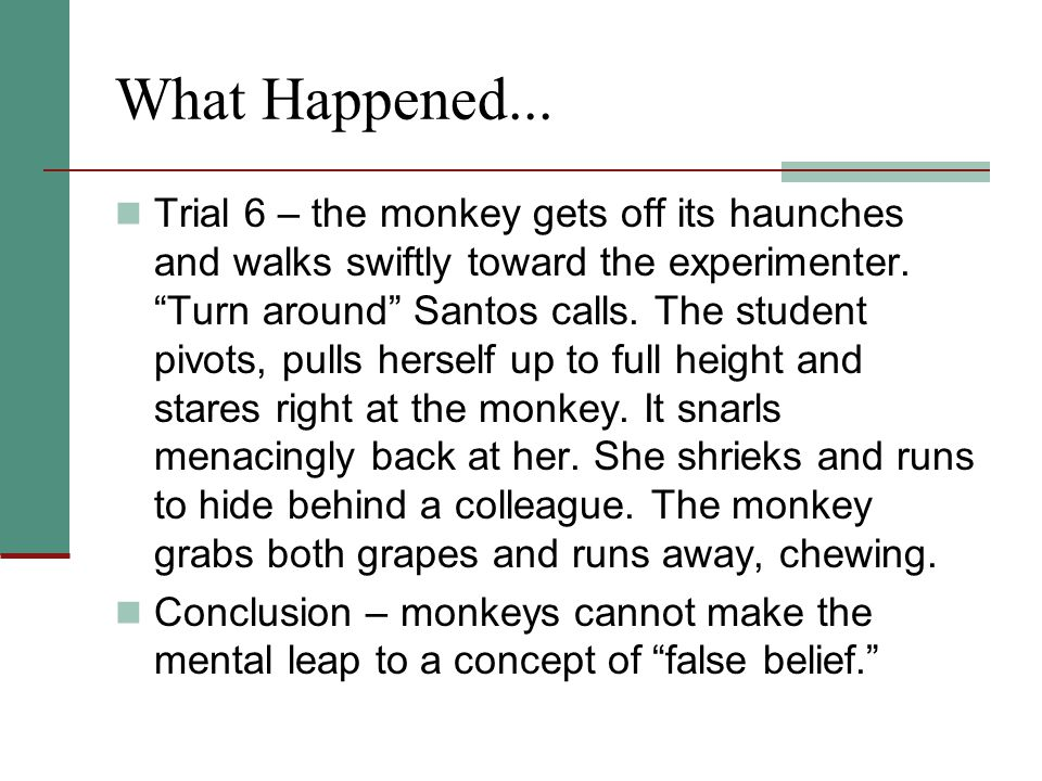 "What Happened... Trial 6 – the monkey gets off its haunches and walks swiftly toward the experimenter. ""Turn around"" Santos calls. The student pivots,"