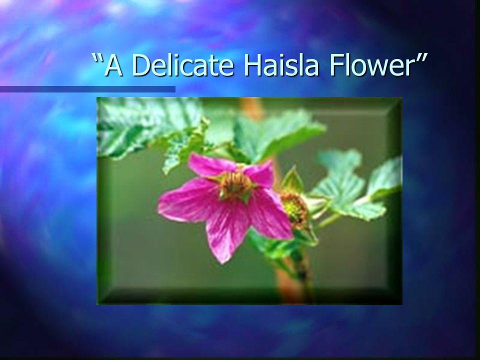A Delicate Haisla Flower A Delicate Haisla Flower