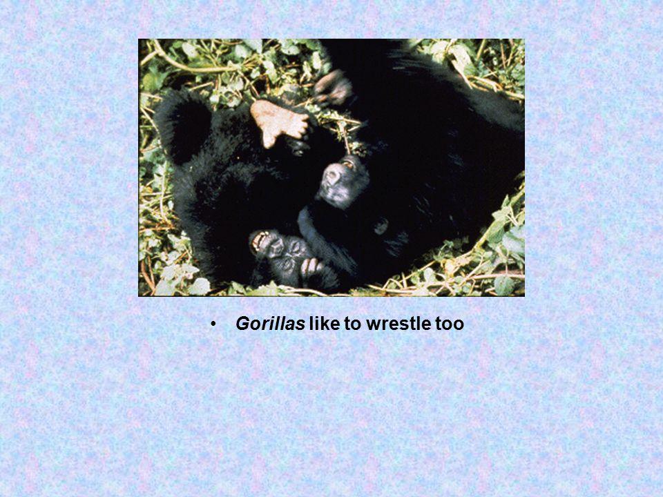 Gorillas like to wrestle too