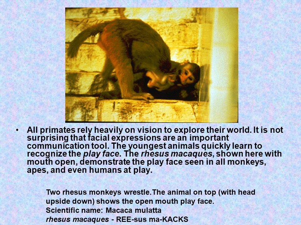 All primates rely heavily on vision to explore their world.