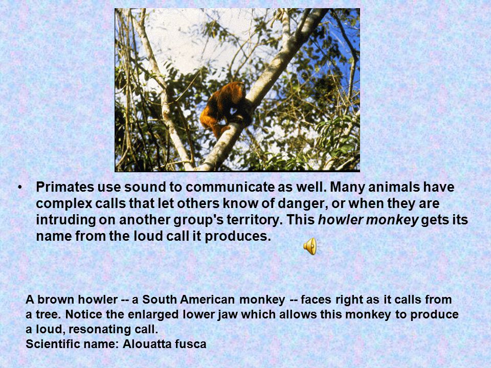 Primates use sound to communicate as well.