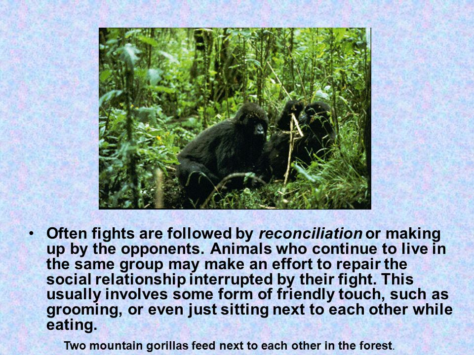 Often fights are followed by reconciliation or making up by the opponents.
