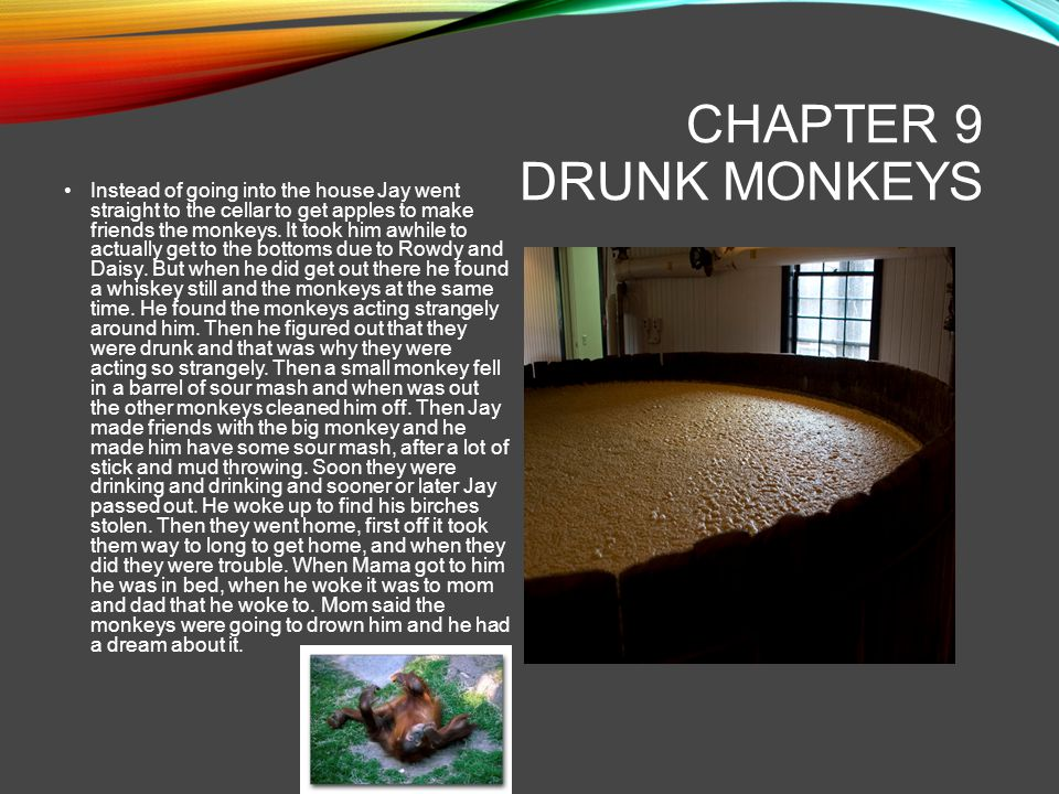 CHAPTER 9 DRUNK MONKEYS Instead of going into the house Jay went straight to the cellar to get apples to make friends the monkeys. It took him awhile