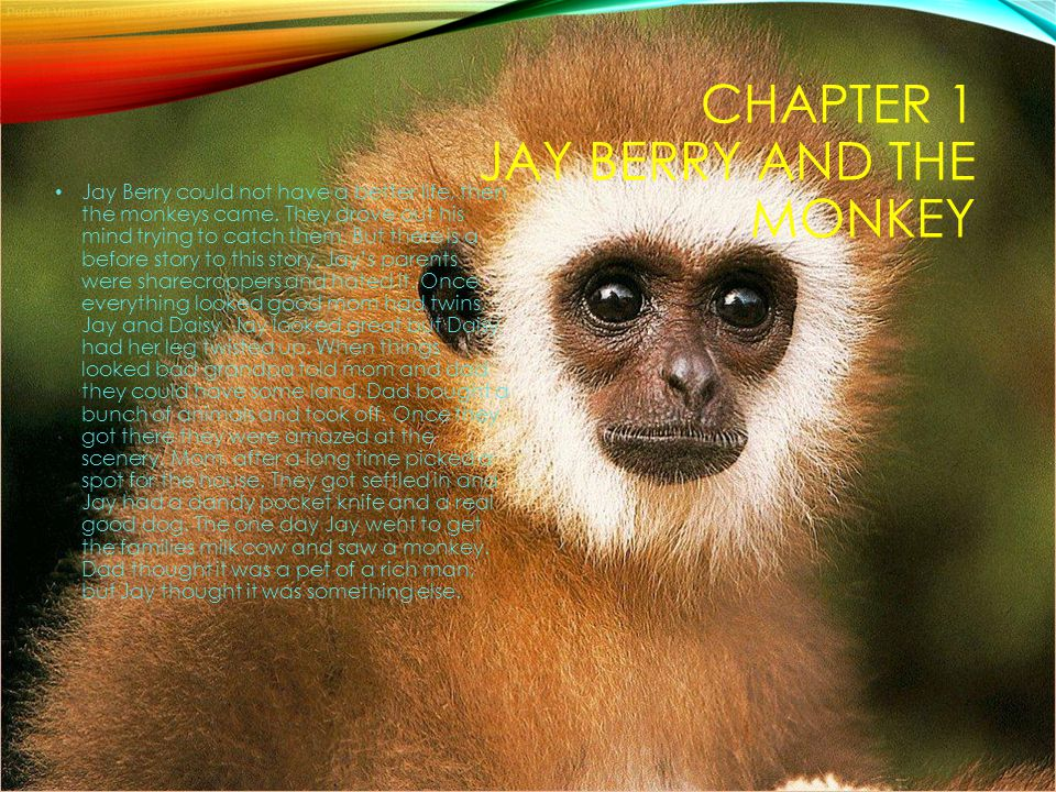 CHAPTER 1 JAY BERRY AND THE MONKEY Jay Berry could not have a better life, then the monkeys came. They drove out his mind trying to catch them. But th