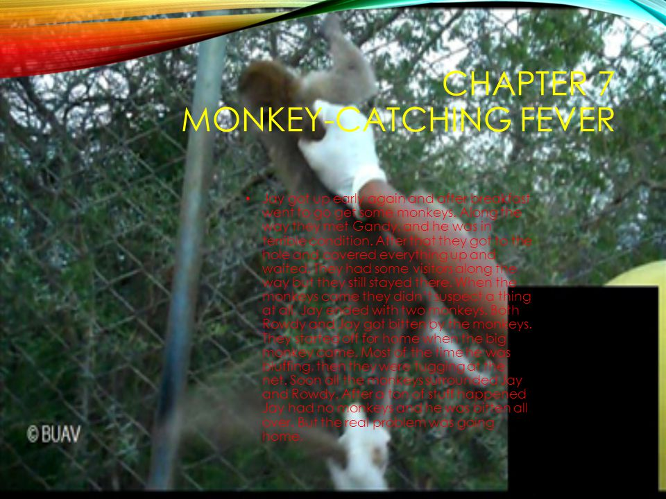 CHAPTER 7 MONKEY-CATCHING FEVER Jay got up early again and after breakfast went to go get some monkeys. Along the way they met Gandy, and he was in te