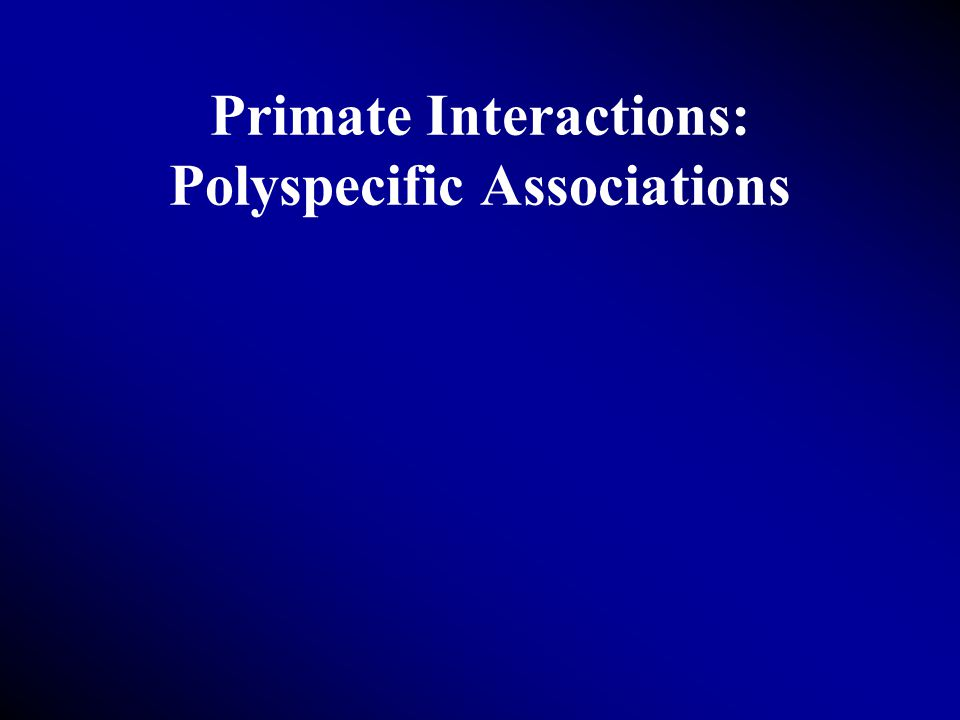 Primate Interactions: Polyspecific Associations