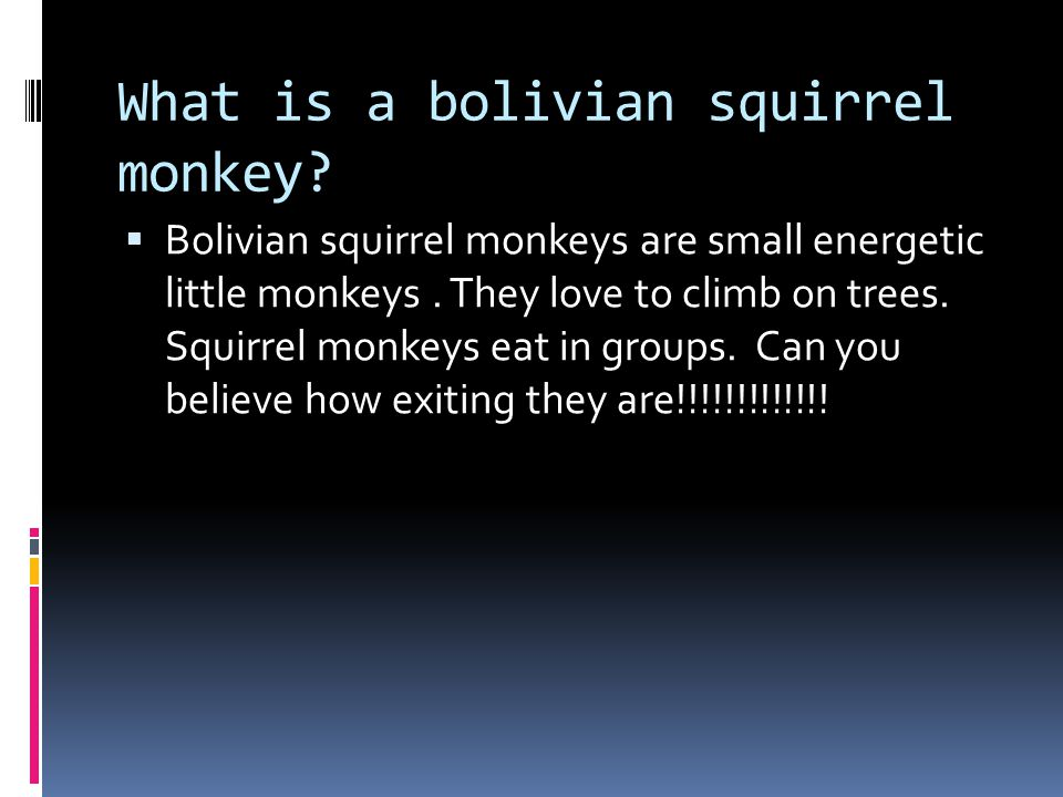 Introduction  I really like bolivian squirrel monkeys because they are really exciting.