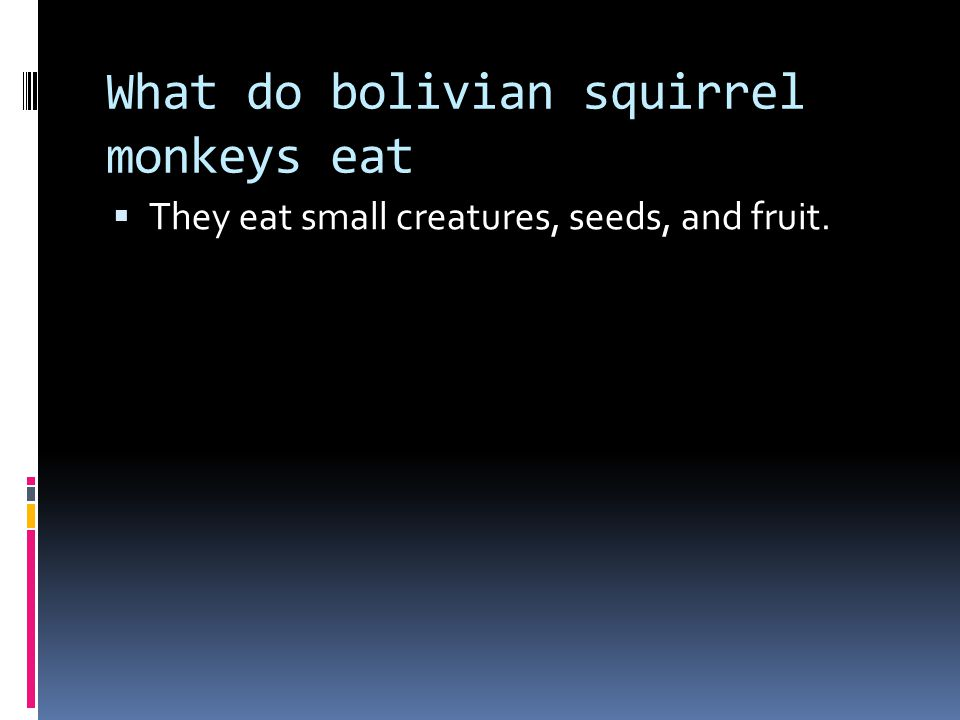 Where do bolivian squirrel monkeys live.