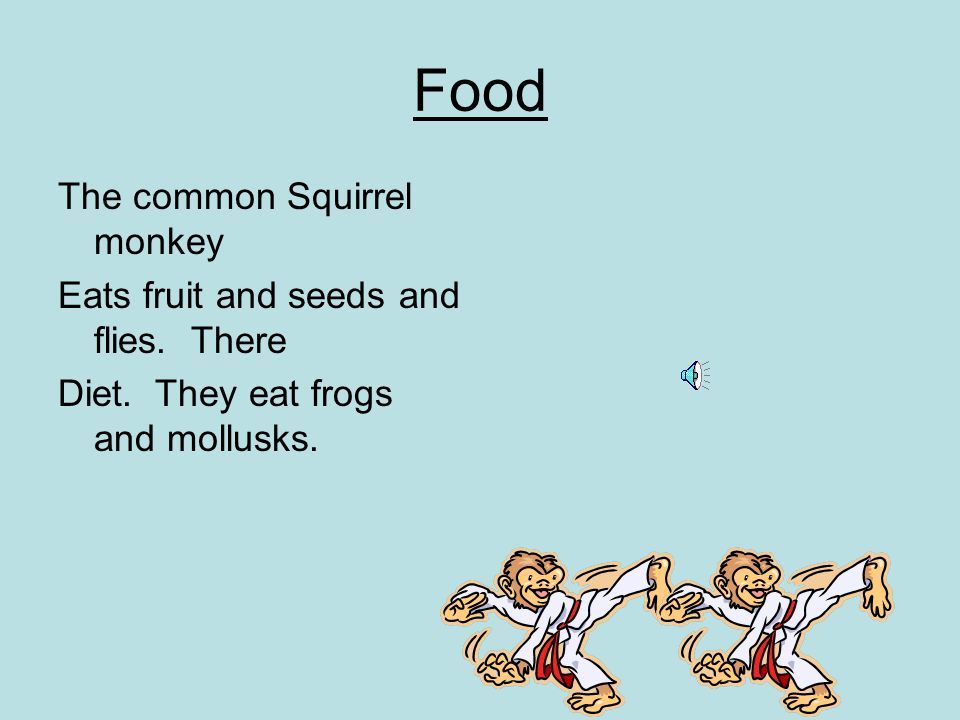 Food The common Squirrel monkey Eats fruit and seeds and flies.