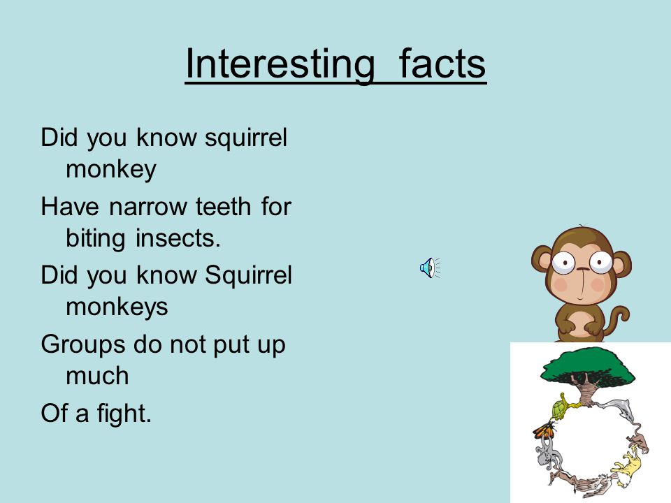 Interesting facts Did you know squirrel monkey Have narrow teeth for biting insects.