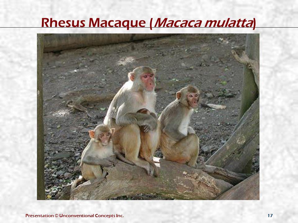 Presentation © Unconventional Concepts Inc.17 Rhesus Macaque (Macaca mulatta)