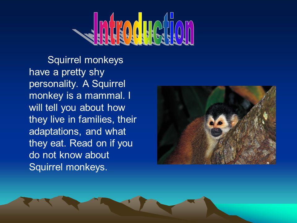 Squirrel monkeys have a pretty shy personality. A Squirrel monkey is a mammal.