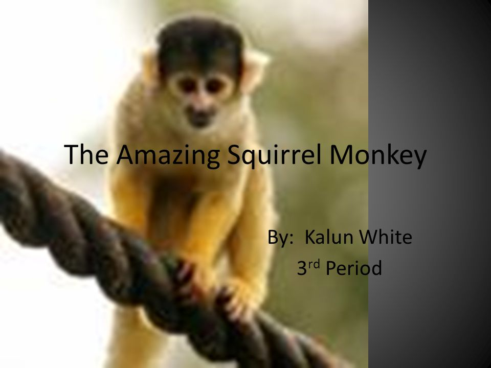 The Amazing Squirrel Monkey By: Kalun White 3 rd Period