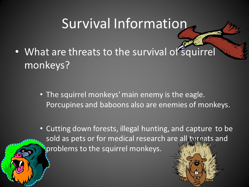 Survival Information What are threats to the survival of squirrel monkeys.