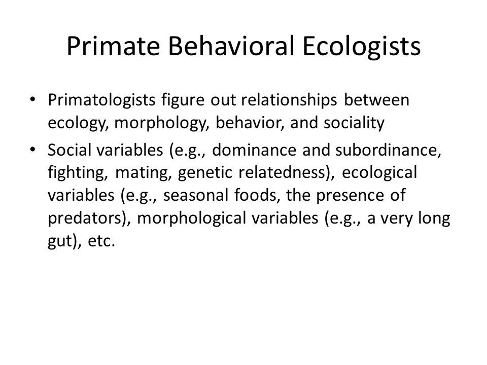 Primate Behavioral Ecologists Primatologists figure out relationships between ecology, morphology, behavior, and sociality Social variables (e.g., dom