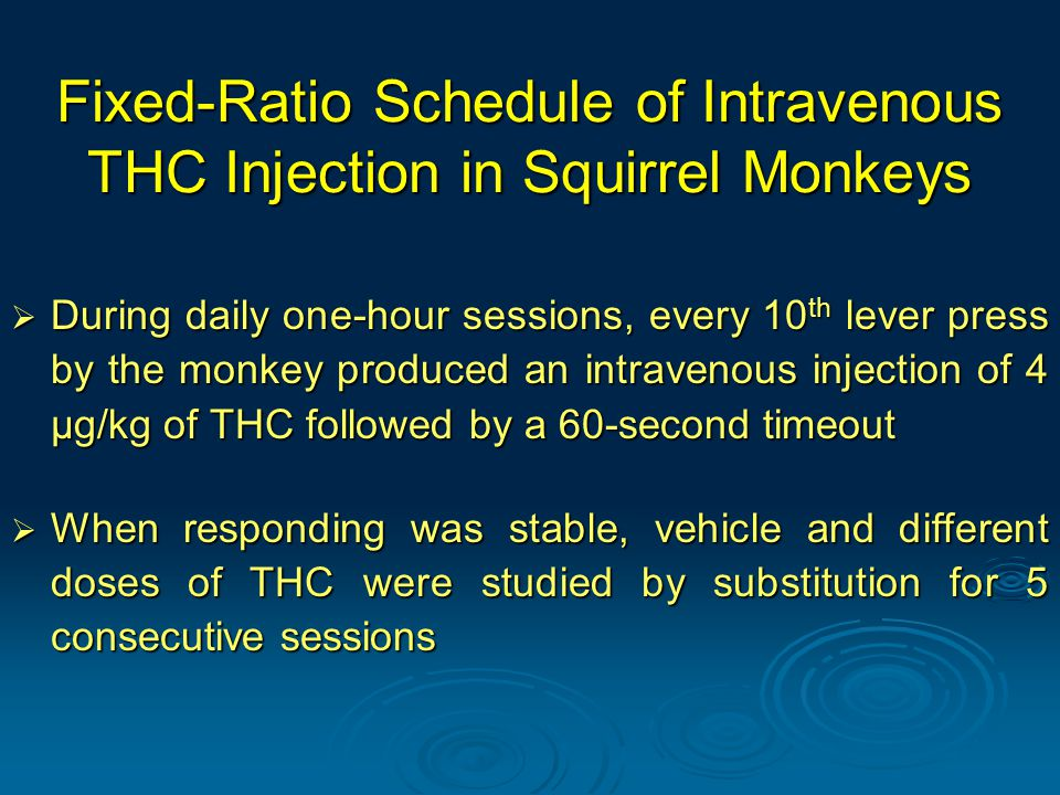 Fixed-Ratio Schedule of Intravenous THC Injection in Squirrel Monkeys  During daily one-hour sessions, every 10 th lever press by the monkey produced an intravenous injection of 4 μg/kg of THC followed by a 60-second timeout  When responding was stable, vehicle and different doses of THC were studied by substitution for 5 consecutive sessions