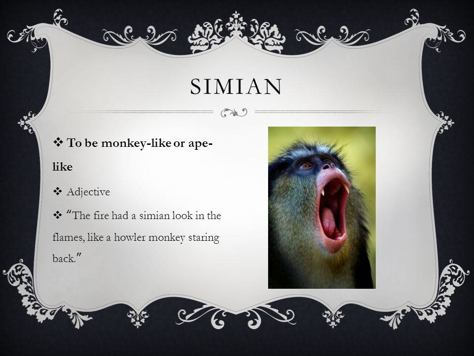  To be monkey-like or ape- like  Adjective  The fire had a simian look in the flames, like a howler monkey staring back. SIMIAN