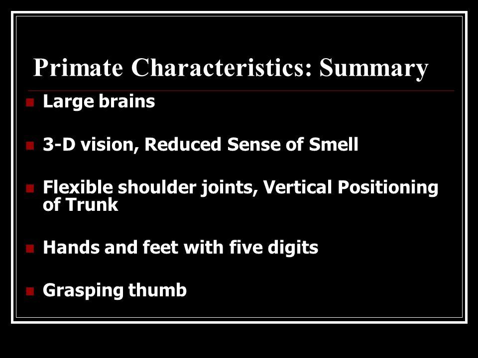 Primate Characteristics: Body Stance Progressive development of upright body stance leading to bipedalism