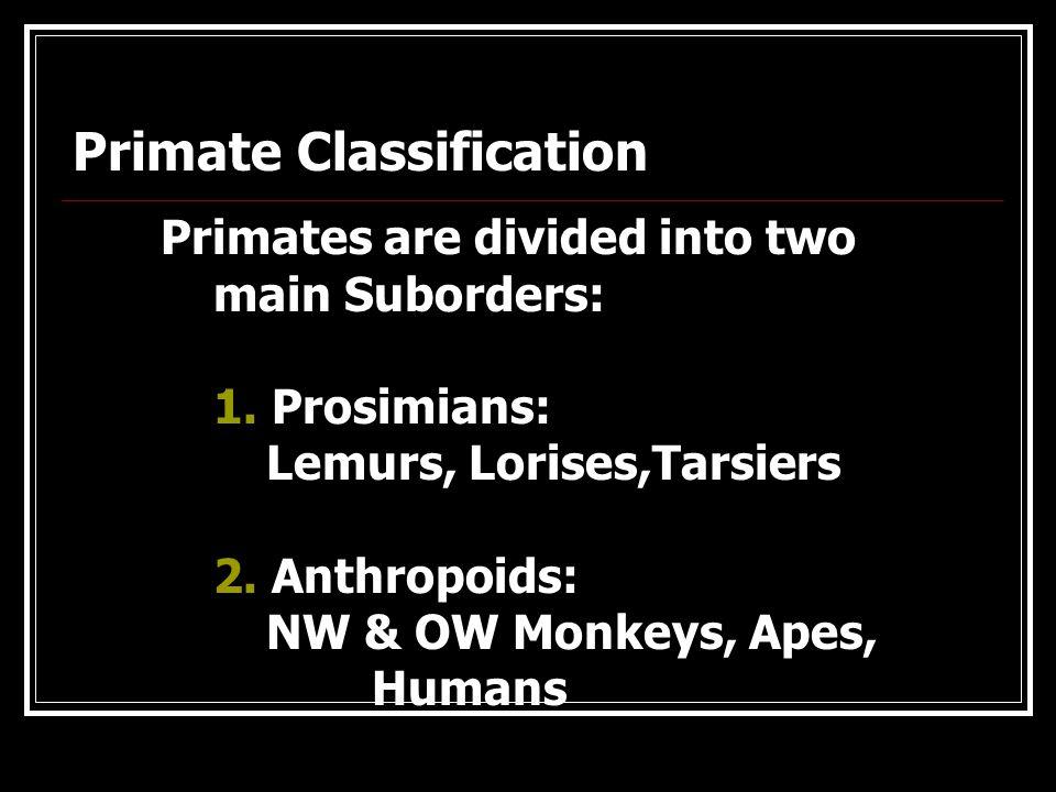 Primate Distribution