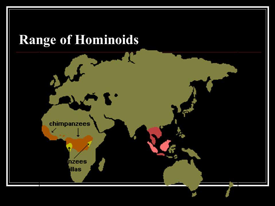 Hominoid Taxonomy