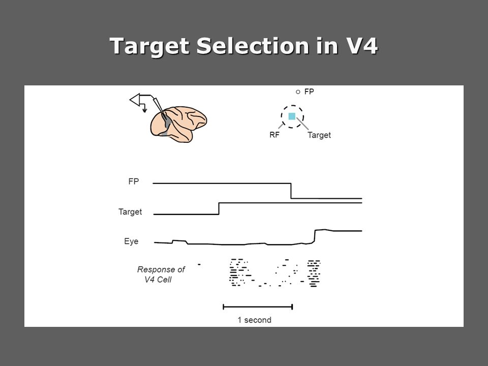 Target Selection in V4