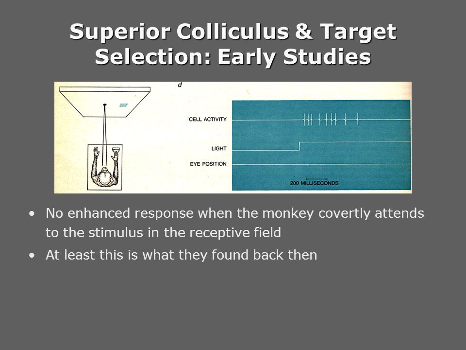 Go / No-go Task Monkeys fixated on white spot Trigger signal: change of color –Go trial (solid square): shift gaze to the target – saccade –Nogo trial (asterisk): maintain fixation – no saccade Color change can occur before, during or after target onset