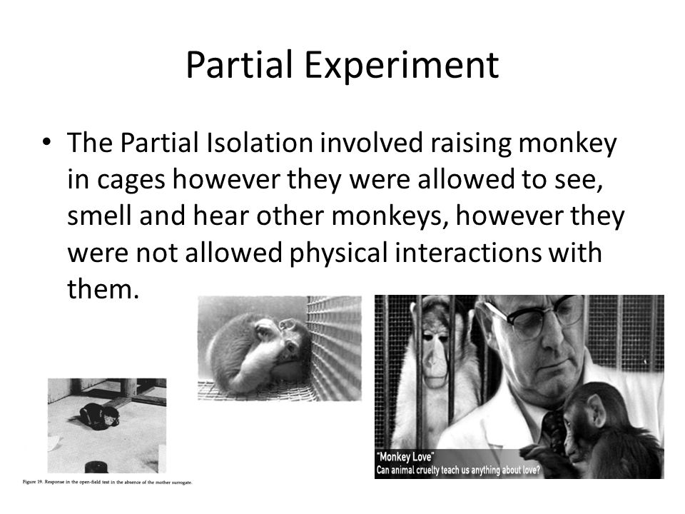 Partial Experiment The Partial Isolation involved raising monkey in cages however they were allowed to see, smell and hear other monkeys, however they were not allowed physical interactions with them.