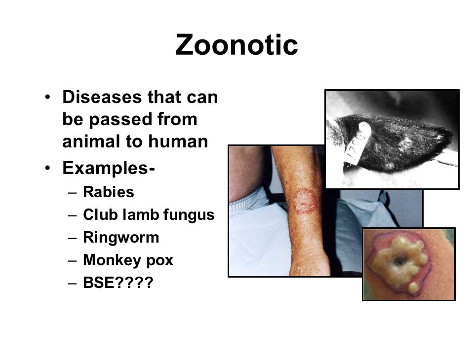 Zoonotic Diseases that can be passed from animal to human Examples- –Rabies –Club lamb fungus –Ringworm –Monkey pox –BSE????