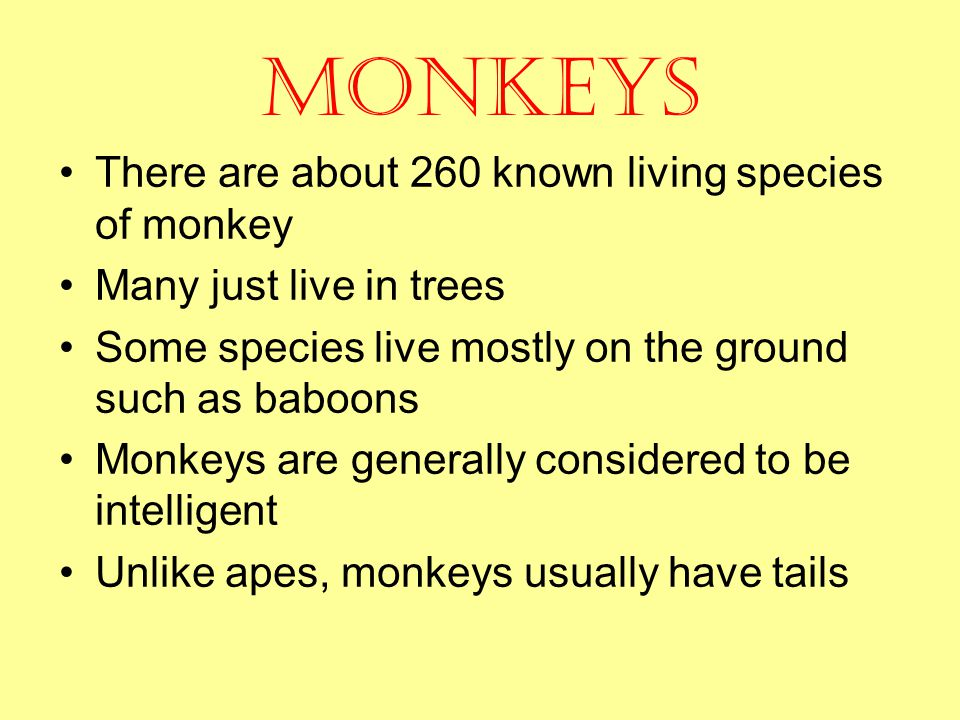 Monkeys There are about 260 known living species of monkey Many just live in trees Some species live mostly on the ground such as baboons Monkeys are generally considered to be intelligent Unlike apes, monkeys usually have tails